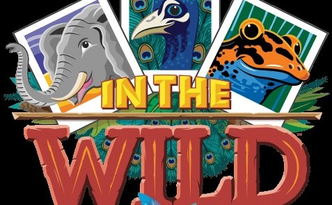 Florida Baptist Convention, Vacation Bible School, VBS, In the Wild